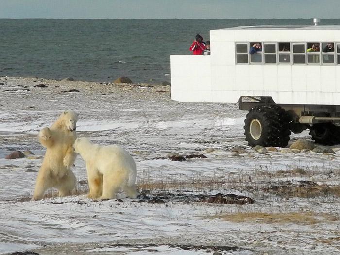 Bears-with-Lodge--Robin-Esrock