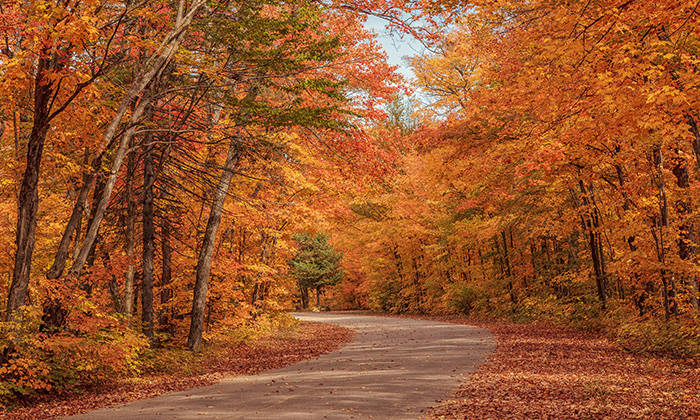If money grew on trees, Fall would be the best season ever.