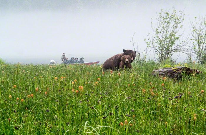 Great Bear Tours