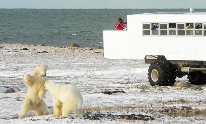 polar-bear-gallery